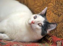 Blinde Katze Lizenzfreie Stockfotos