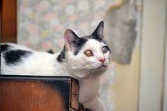 Blinde Katze Stockbilder