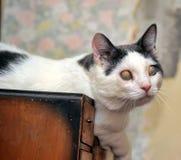 Blinde Katze Stockfoto