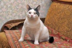 Blinde Katze Lizenzfreies Stockbild