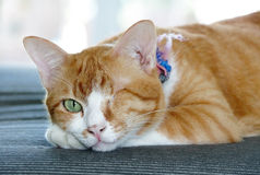 Blinde Katze Stockbild