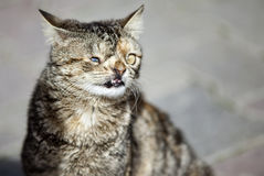 Blinde Katze Stockfotografie