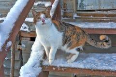 Blinde Katze auf dem Portal Stockbilder