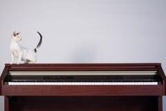 Blinde Katze, die auf einem Klavier spielt Lizenzfreies Stockbild