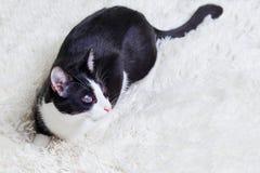 Blinde Katze krank, verletzt, Vorhänge, gerettet aus Stadtstraßen Welttageshaustiere, Konzepte für Schutztier Lizenzfreie Stockfotos