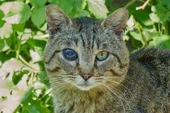 Blinde Katze von einem Auge Stockfotografie