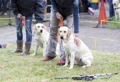 Blinde mit ihren Blindenhunden Lizenzfreies Stockfoto