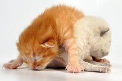 Blinde pasgeboren babykatjes Royalty-vrije Stock Afbeeldingen