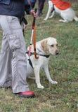 Blinde Person, die mit ihrem Blindenhund geht Stockfotografie