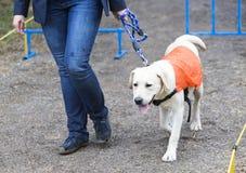 Blinde Person mit ihrem Blindenhund Stockfotos
