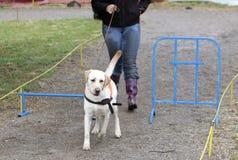 Blinde Person mit ihrem Blindenhund Stockfotografie
