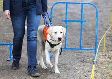 Blinde Person mit ihrem Blindenhund Stockfoto