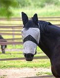 Blinded Horse Royalty Free Stock Images