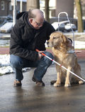 Blindenhund hilft einem blinden Mann Stockfotografie