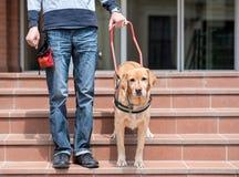 Blindenhund hilft einem blinden Mann Lizenzfreies Stockfoto