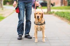 Blindenhund hilft einem blinden Mann Lizenzfreie Stockbilder