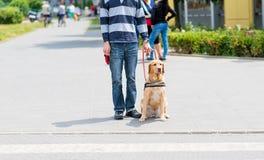 Blindenhund hilft einem blinden Mann Lizenzfreie Stockfotografie