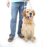 Blindenhund lokalisiert auf Weiß Lizenzfreies Stockbild