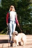 Blindenhund, welche blinder Person mit dem langen Stock hinuntergeht Treppe hilft lizenzfreies stockfoto