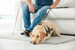 Blinder mit dem Blindenhund, der auf Sofa sitzt Stockfotos