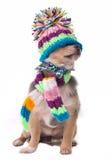 Blindes, geschlossenes Augenkonzept. Gekleideter Chihuahua-Welpe Stockfotos