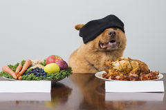 Blindfold taste game with dog Royalty Free Stock Image