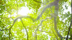 Blinding sun through tree leaves stock video footage