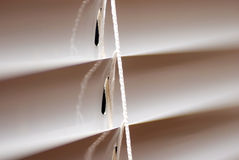 Blinds fragment. Window blinds fragment with a cord macro Royalty Free Stock Photo