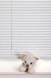 Blinds and soft toys. Baby soft toy on the window with the blinds closed Royalty Free Stock Images