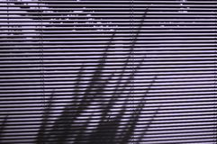 Blinds and tree shadow Royalty Free Stock Image