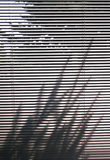 Blinds and tree shadow. Blinds and shadows Stock Image