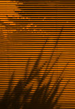 Blinds and tree shadow Royalty Free Stock Photography