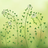Blindweed flowers. Royalty Free Stock Photo