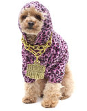 Bling Bling Poodle. A puppy wearing a pink leopard print hoodie and a gold chain necklace with Bling Bling on it, isolated on a white background royalty free stock photography