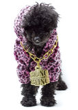 Bling Bling Puppy Stock Images