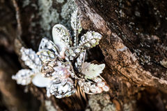 Bling in the tree Royalty Free Stock Images