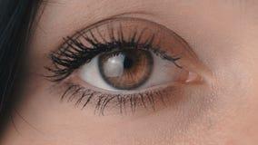 Blinka för öga för ` s för kvinna för makronärbildbrunt arkivfilmer