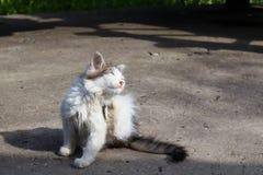 Blinkar kattungen royaltyfri fotografi
