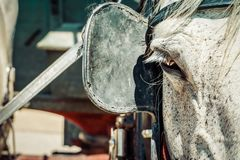 Blinkers. More commonly known as blinders, covering a horses eye restricting them from seeing to the rear and side Stock Image