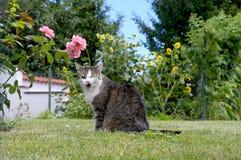 Blinzeln der Katze der getigerten Katze auf Gras Lizenzfreie Stockfotos