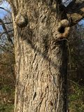 Blinzeln des Baums Stockfotos