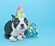 Blinzeln des Geburtstags-Welpen Lizenzfreie Stockfotografie