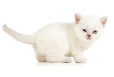 Blinzeln des weißen Kätzchens Stockfoto