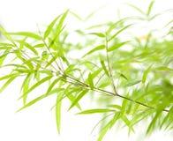 blisko bambusa pozostawia się zdjęcie royalty free