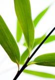 blisko bambusa pozostawia się Obrazy Stock