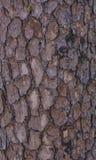 blisko brown konsystencja do lasu Zdjęcie Royalty Free