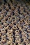 blisko coral ciężko Sulawesi Indonesia. Zdjęcie Stock