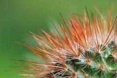 blisko do kaktusa Zdjęcie Royalty Free