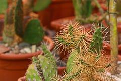 blisko do kaktusa Zdjęcie Stock