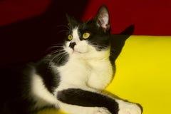 blisko do kota zwierząt postać z kreskówki śmieszny odosobniony portret Obrazy Royalty Free